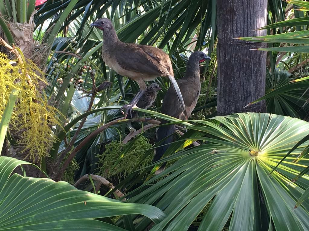野鳥もいます