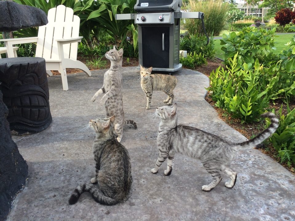 獲物を狙う猫たち