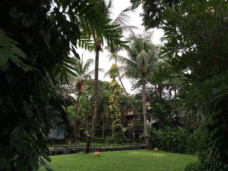 リゾート内の緑