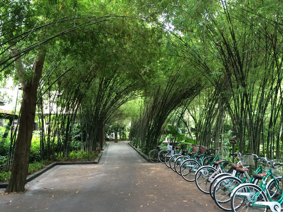 広い敷地内の移動に便利な貸し自転車