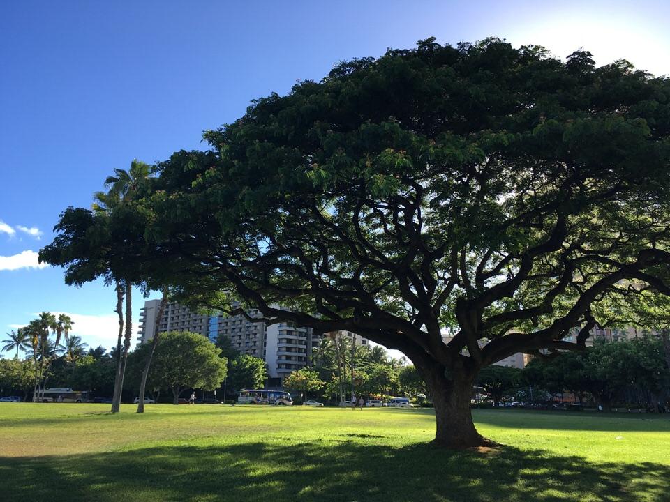 公園と大きな木