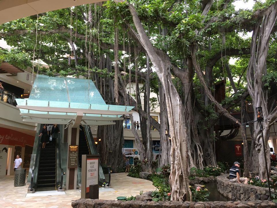 インターナショナルマーケットプレイス内に生い茂る巨大な木